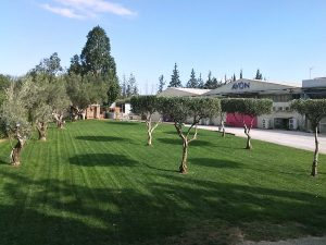 Συντήρηση-Κήπων-Αθήνα 4