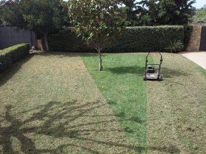 Συντήρηση κήπων-Εξαραίωση χλοοτάπητα-Turf verticutting-Topos Renovation4
